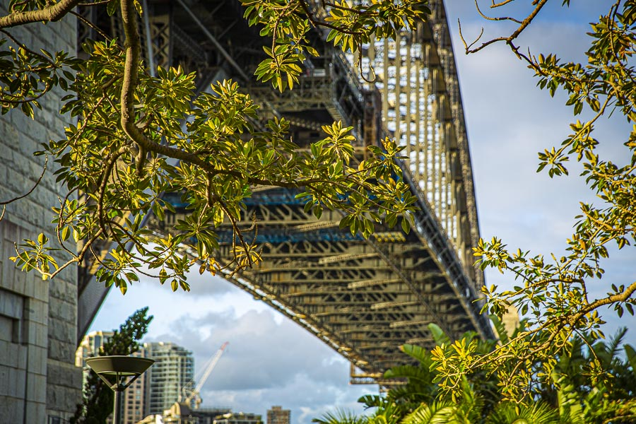 Sydney Harbour Bridge With Trees In The Foreground